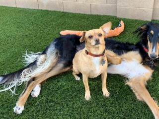 Artificial Grass – Pet Friendly – Dogs on Grass – Yard Stylist – Arizona
